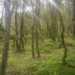 Sunlight streams into the forest on the route to see Mt. Waiera